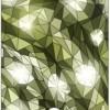 Jack Parrot 036 for Sony Xperia U Sony Xperia U Mobile Skin